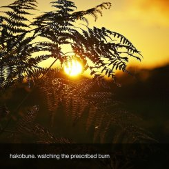 Hakobune : Watching the Prescribed Burn [CD-R]