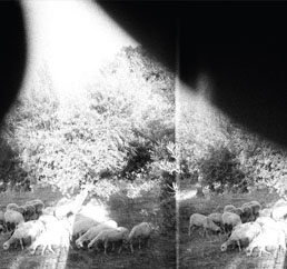 Godspeed You! Black Emperor : Asunder, Sweet And Other Distress [CD]