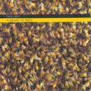Dollboy : A Beard Of Bees [CD]