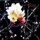 Beroshima : Polyphonication [CD]