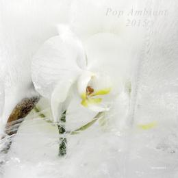 Various Artists : Pop Ambient 2015 [CD]