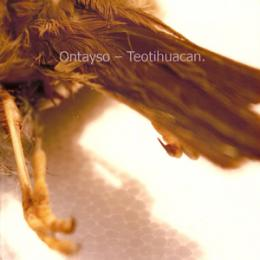 Ontayso : Teotihuacan [CD-R]